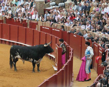 Teasing The Bull