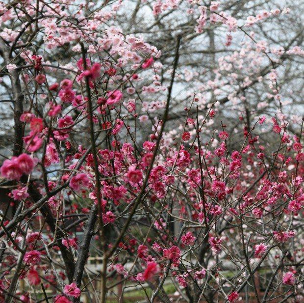 Blossom Watch 2