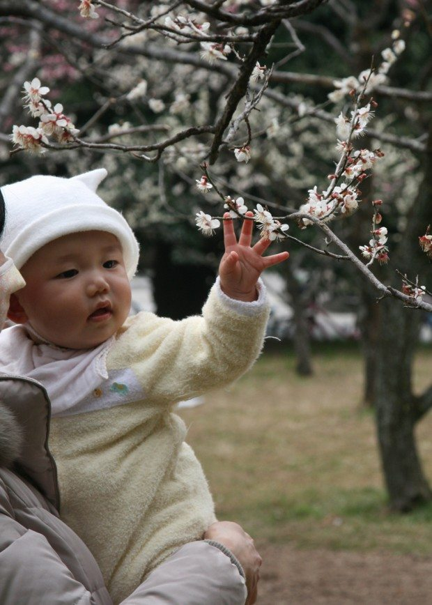 Even Babies Learn to Admire Blossom