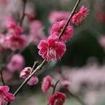 Hello Blossom