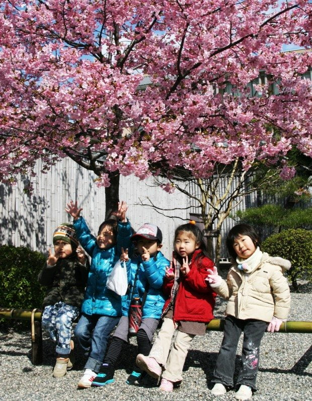 Children Under Blossom Tree