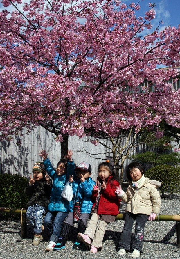 Blossom Watch