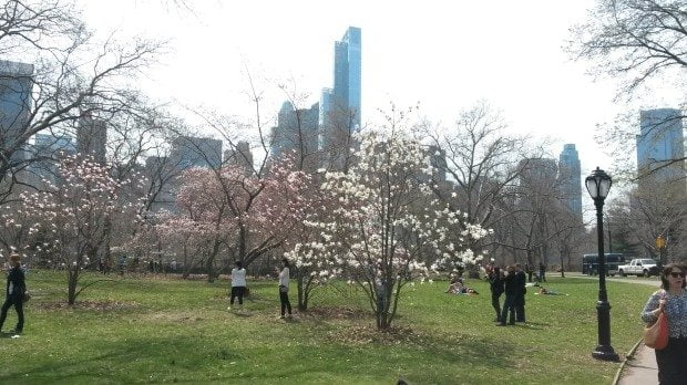 15 Central Park this spring
