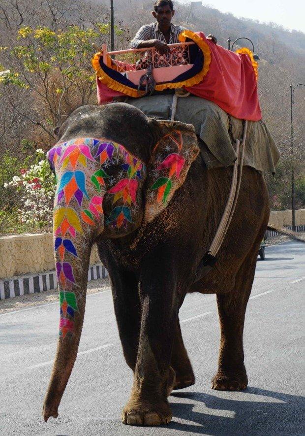 Jaipur - Elephant