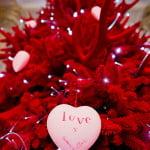The Red Velvet Tree of Love